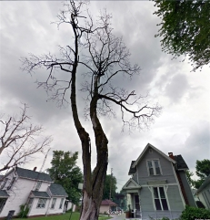 The old sycamore now gone planted by Hirschy in front of his home